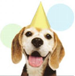 Click Here for Beagle Rescue & Adoption...