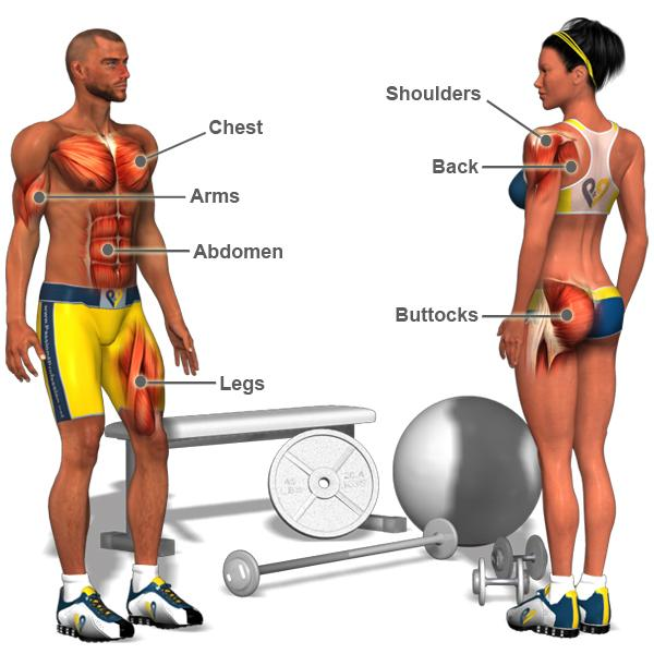 Exercise & Muscle Directory
